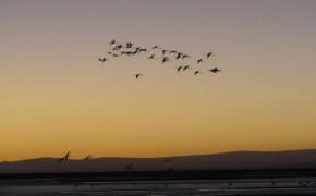 flamingo sunset in atacama desert, salt flats in atacama desert, pictures of atacama desert, atacama desert, pictures of flamingos