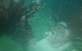 scuba diving, lion fish, diving in colombia, diving in taganga