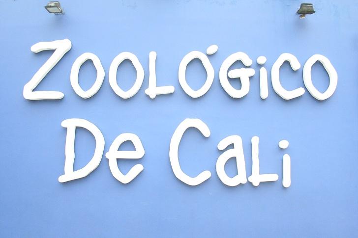 cali zoo, zoo in cali colombia, zoo cali colombia