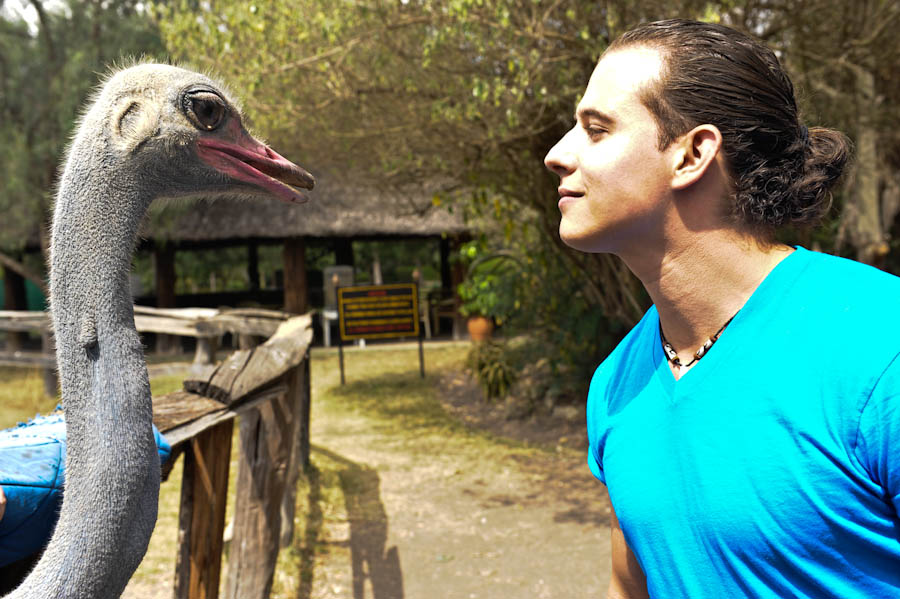 riding an ostrich, ostrich farm nairobi, ostrich park, petting an Ostrich Nairobi