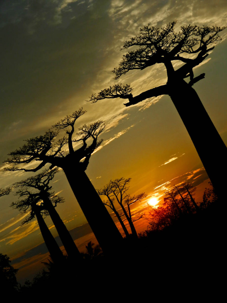 Avenue of the Baobabs, Avenue of the Baobabs Sunset, Avenue of the Baobabs Madagasacar