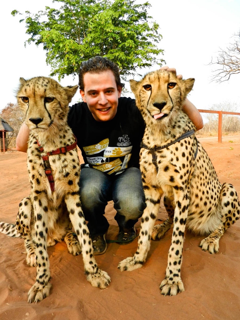 Petting a cheetah, petting cheetahs