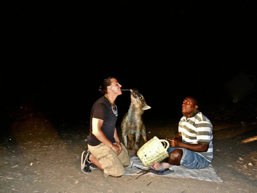 feeding hyenas, hyena feeding, feeing hyena