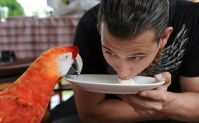 parrot, macaw parrot