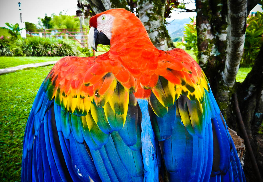 Colorful Macaw ...