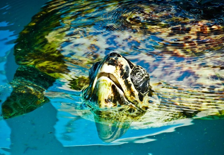 Sea Turtle in Brazil