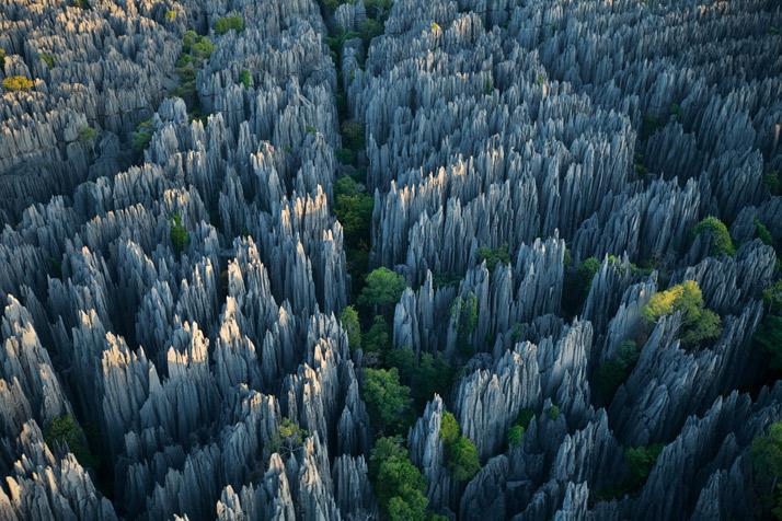 Stone Forrest Madagascar