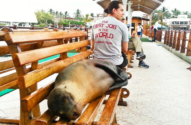 Sea Lion at Galapagos Islands