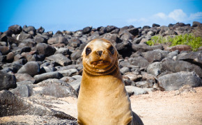 Baby Sea Lion at Galapagos Islands