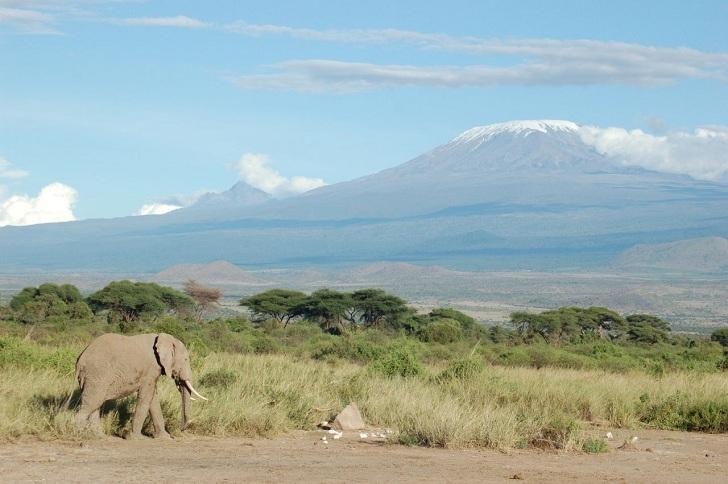 Elephant_and_Kilimanjaro
