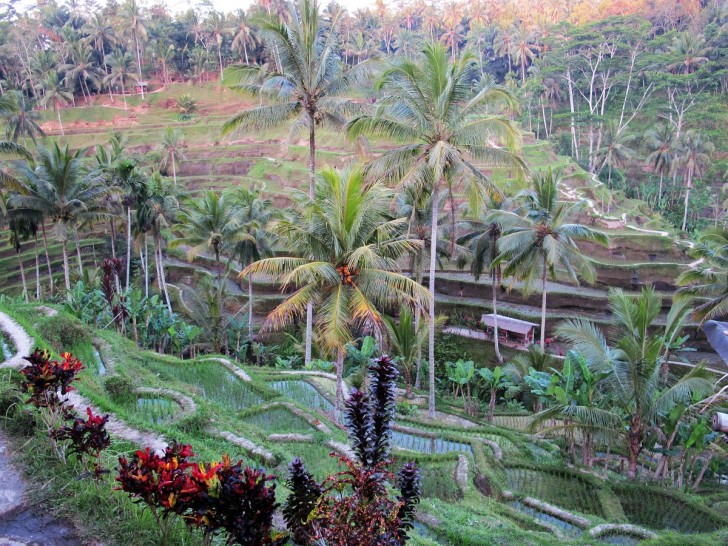 top Bali tourist attractions