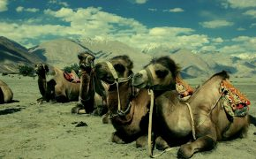 Why You Must Visit Ladakh in 2016