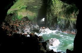 The Sea Lion Caves of Oregon