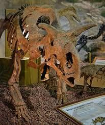 Dinosaur Center