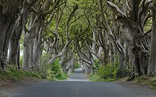 The Mysterious Dark Hedges of Northern Ireland