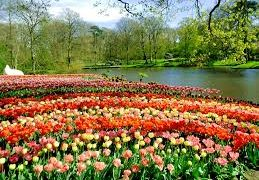Colorful Keukenhof Gardens And Castle In The Netherlands