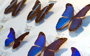 May Natural History Museum In Colorado Springs:  The World's Largest Private Insect Collection