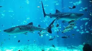 Georgia Aquarium In Atlanta: The Second Largest Indoor Sea ...