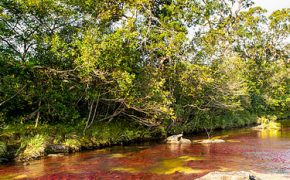 Crystal Channel or Caño Cristales: The River of Five Colors in Colombia